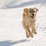 Pelles dog-1-2