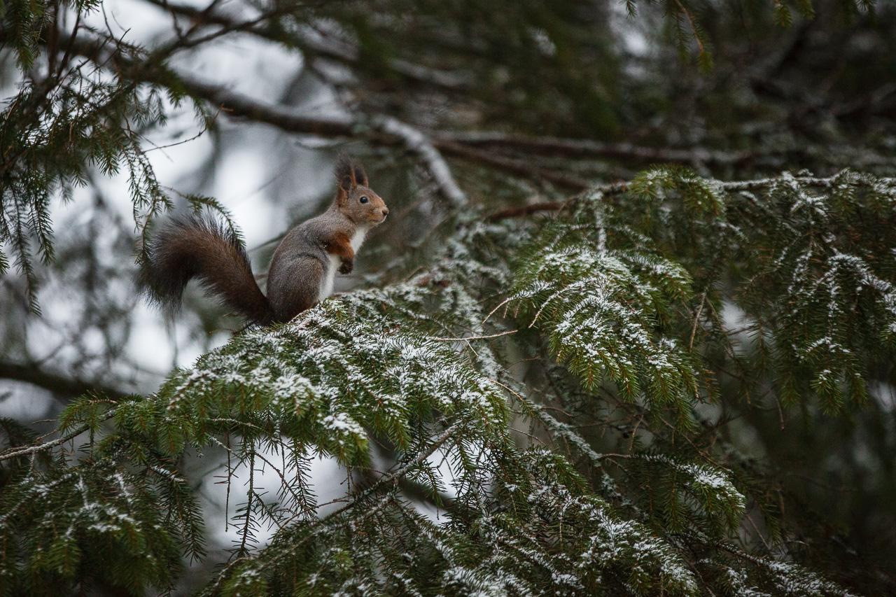 Squirrel number 1