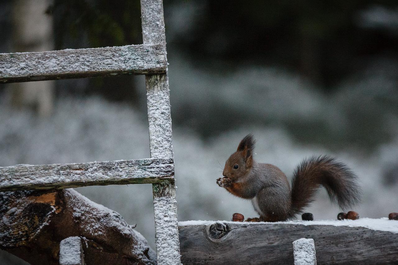 Squirrel number 1 again.