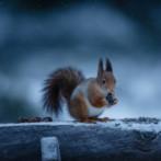 Oh squirrels my squirrels =)